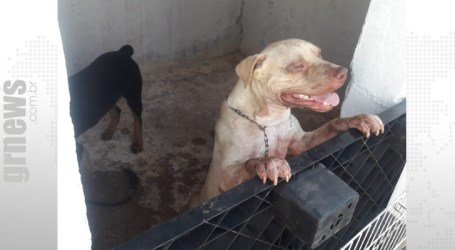 Posse responsável: criação do cachorro é o que o torna agressivo, alerta médica veterinária