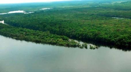 Conselho recomenda concessão de florestas no Amazonas