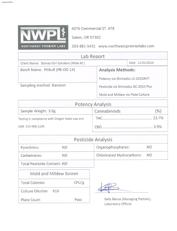 Pitbull%2011.01.14[1]
