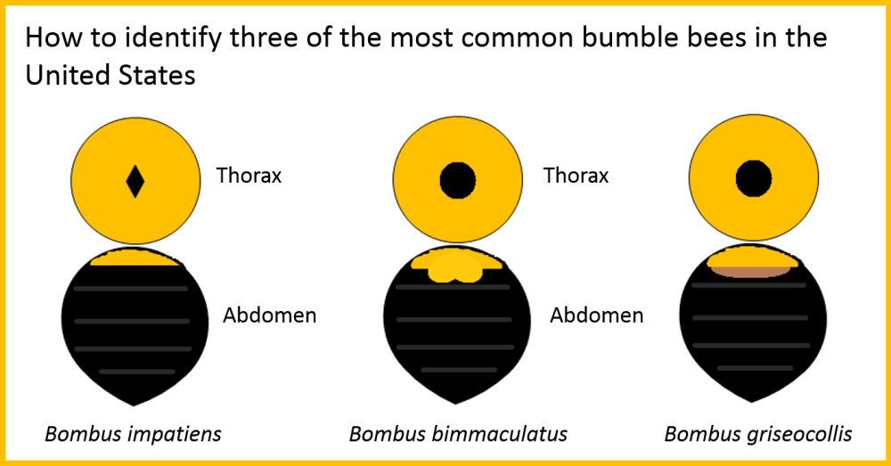 bumble bee guide.png