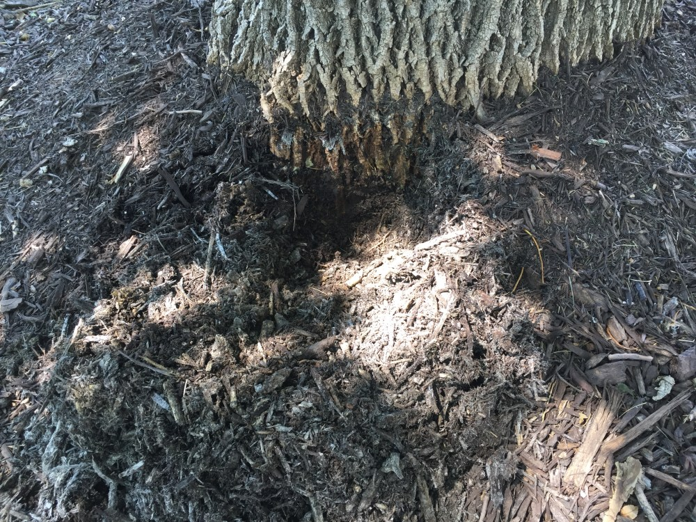 bole mulch ash (2)