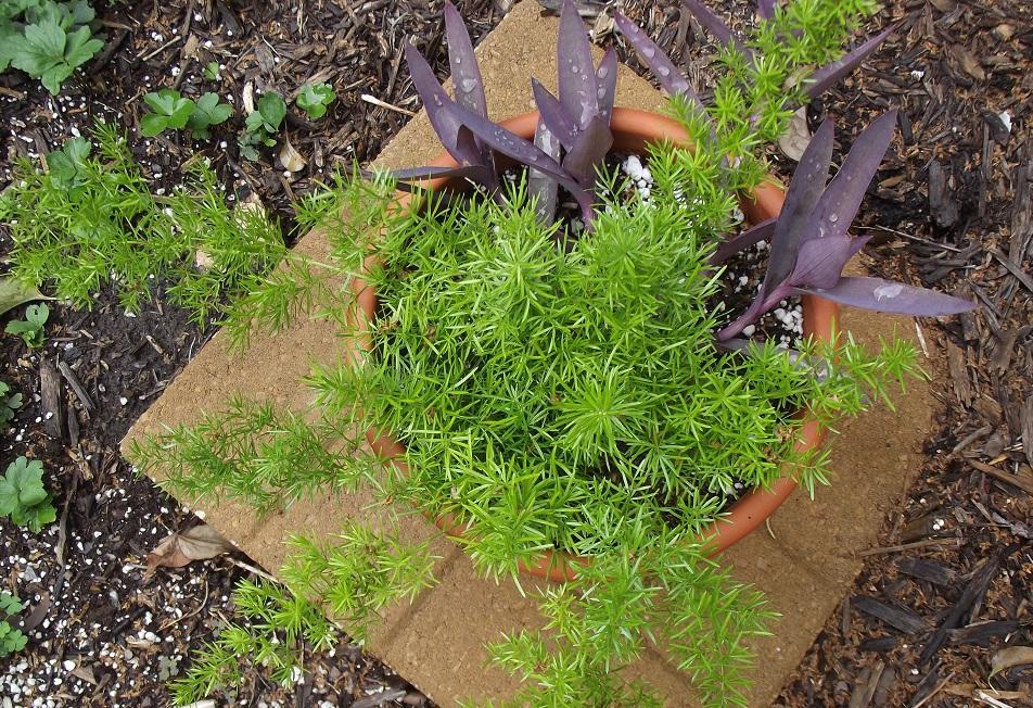 bringing houseplants in 1