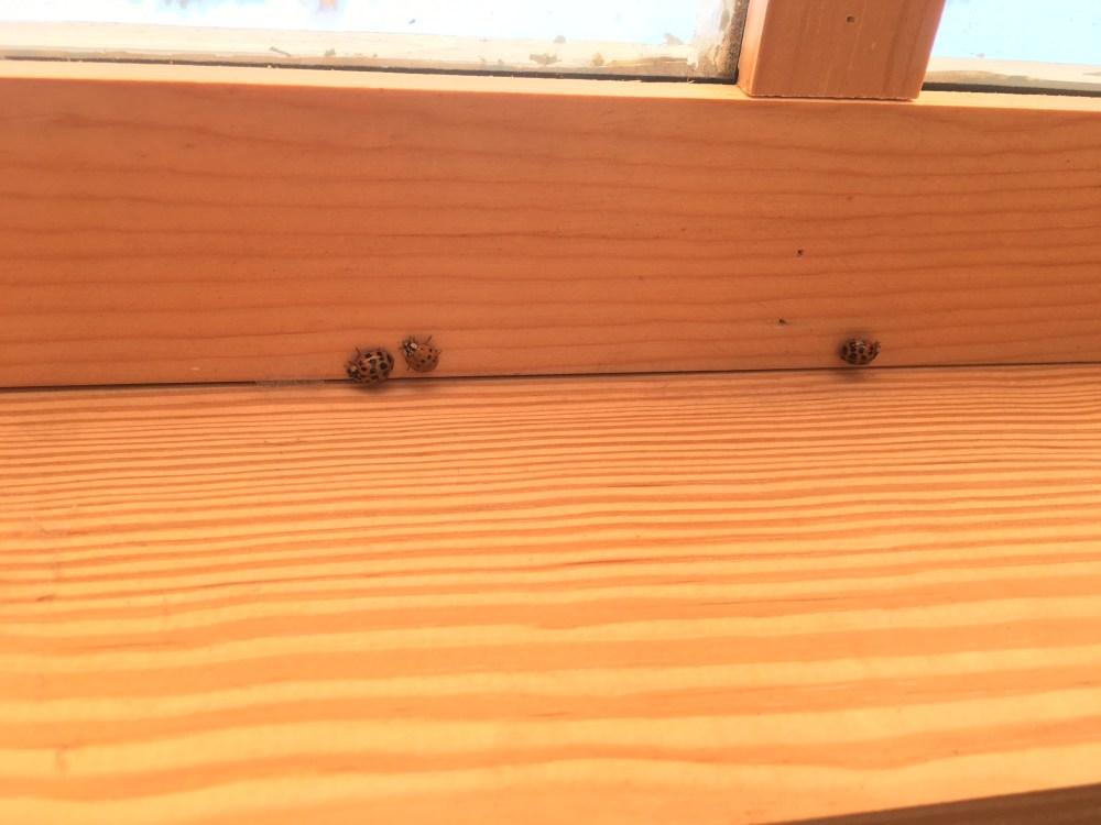 MALB inside window (1)