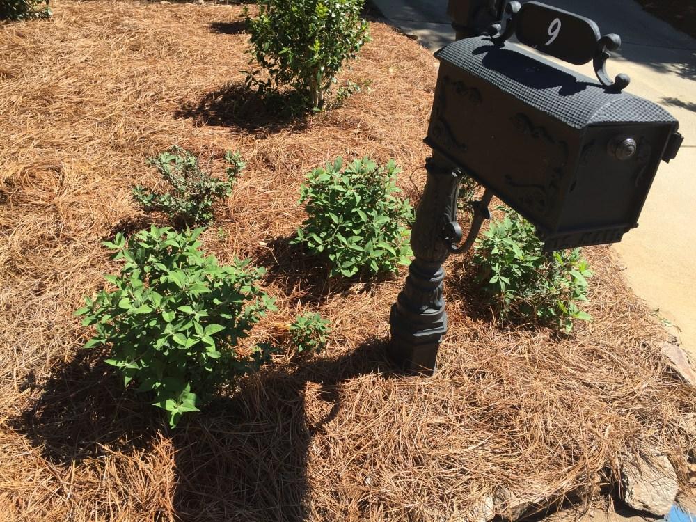 9 pine mulch