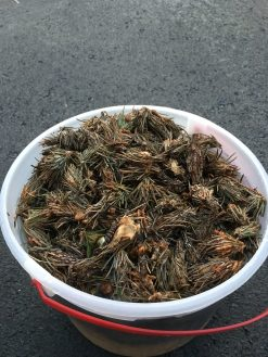 Bagworms will crawl away and infest another plant if they are not destroyed - a bucket of soapy water will do the trick. (Photo: J. Green)