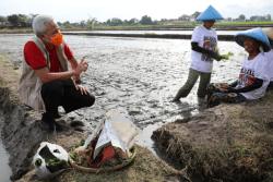 Gubernur Ganjar Minta Pengawasan Distribusi Pupuk Bersubsidi Ditingkatkan, Jika Temukan Pengecer Nakal Masyarakat Wajib Lapor