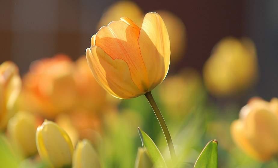 Оранжевый уровень опасности объявлен в Беларуси на 6 мая из-за сильного ветра