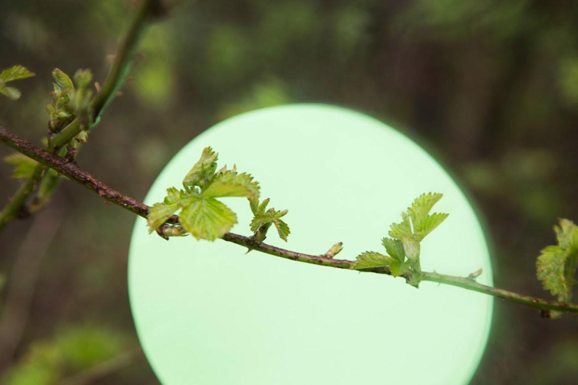 bramenblad - groene avonturen