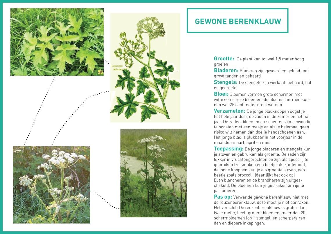 berenklauw - groene avonturen