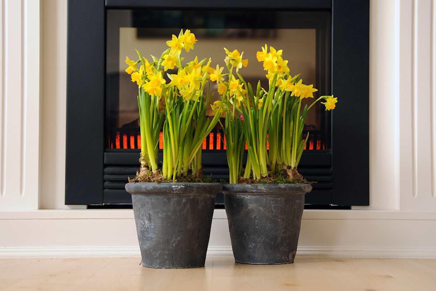 Plantenlijst Robs Grote Tuinverbouwing 0701  GroenVandaag