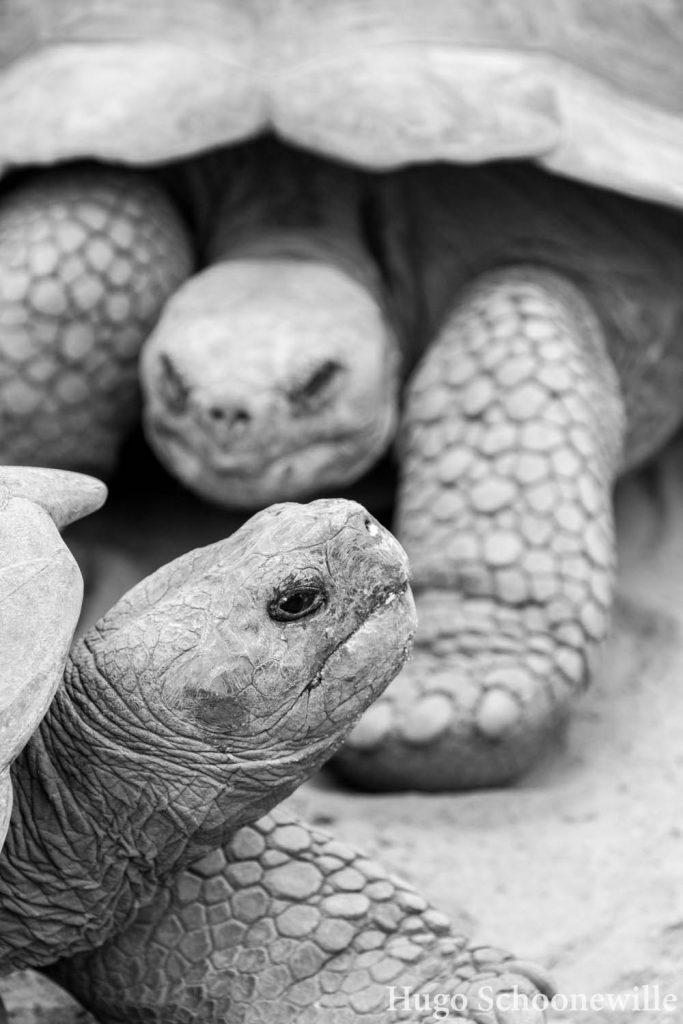 Centro de Crianza de Tortugas