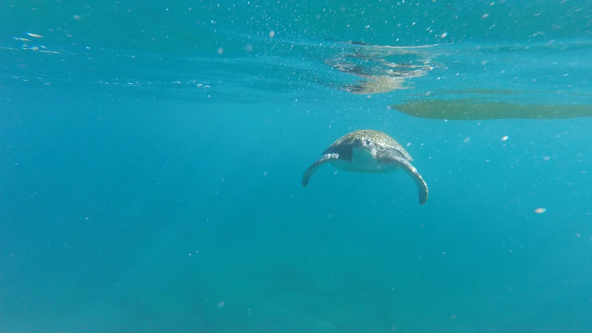 Zeeschildpad naast een kajak