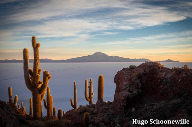 Zonsopkomst over de zoutvlakte Salar de Uyuni in Bolivia vanaf cactuseiland Incahuasi, met cactussen op de voorgrond. Rondreis Bolivia route.