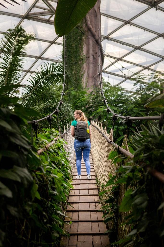 Vrouw wandelt over een loopbrug in Gondwanaland in Leipzig Zoo.