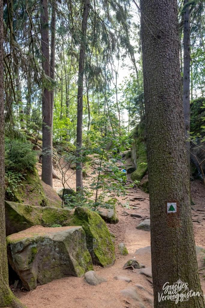 Een bos in het Boheems Paradijs met een boom met een groen routemerkteken.