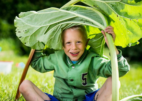 Gratis groentezaad voor basisscholen en BSO's uit Hengelo