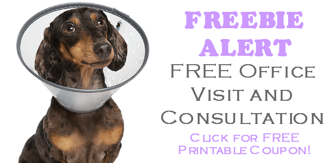 image about Banfield Coupons Printable titled Doggy Cost-free Things Archives ⋆ GroovyFreeStuff No cost Samples
