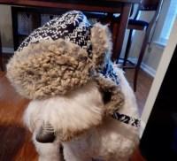 WINTER DOG WEAR - Groovy Goldendoodles