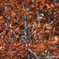 Herbstdetails