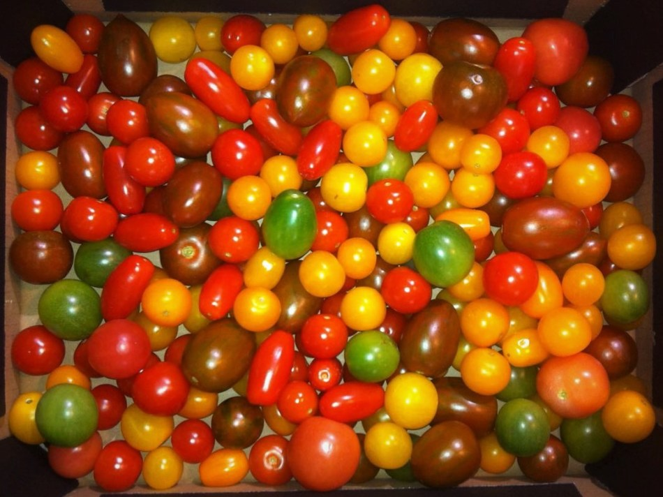GuteKunst_Tomaten_rm