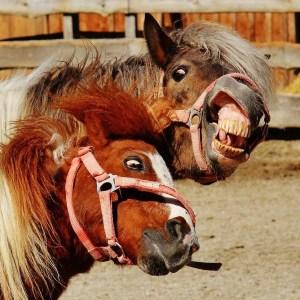 horses, crazy, rational