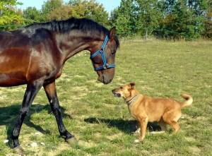 horse, dog