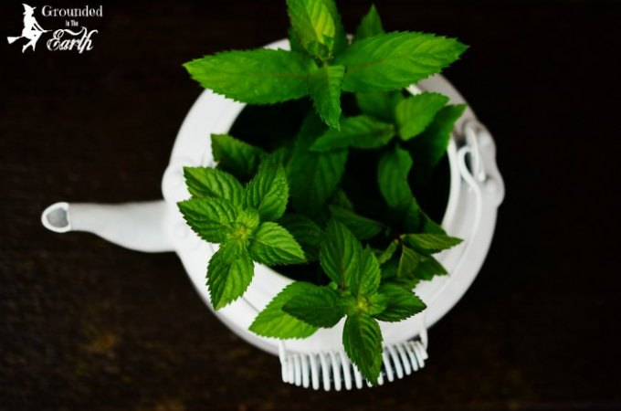 Magical Herbs To Attract Money You Can Grow In Your Home