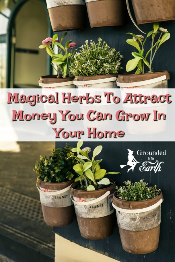 Grow these herbs to attract money in your home