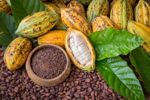 Cacoa beans