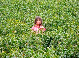 Young Kana in Tea field