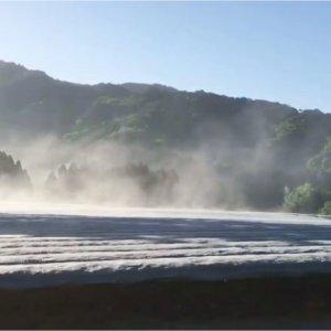 Tea from Sakamoto Tea Farm