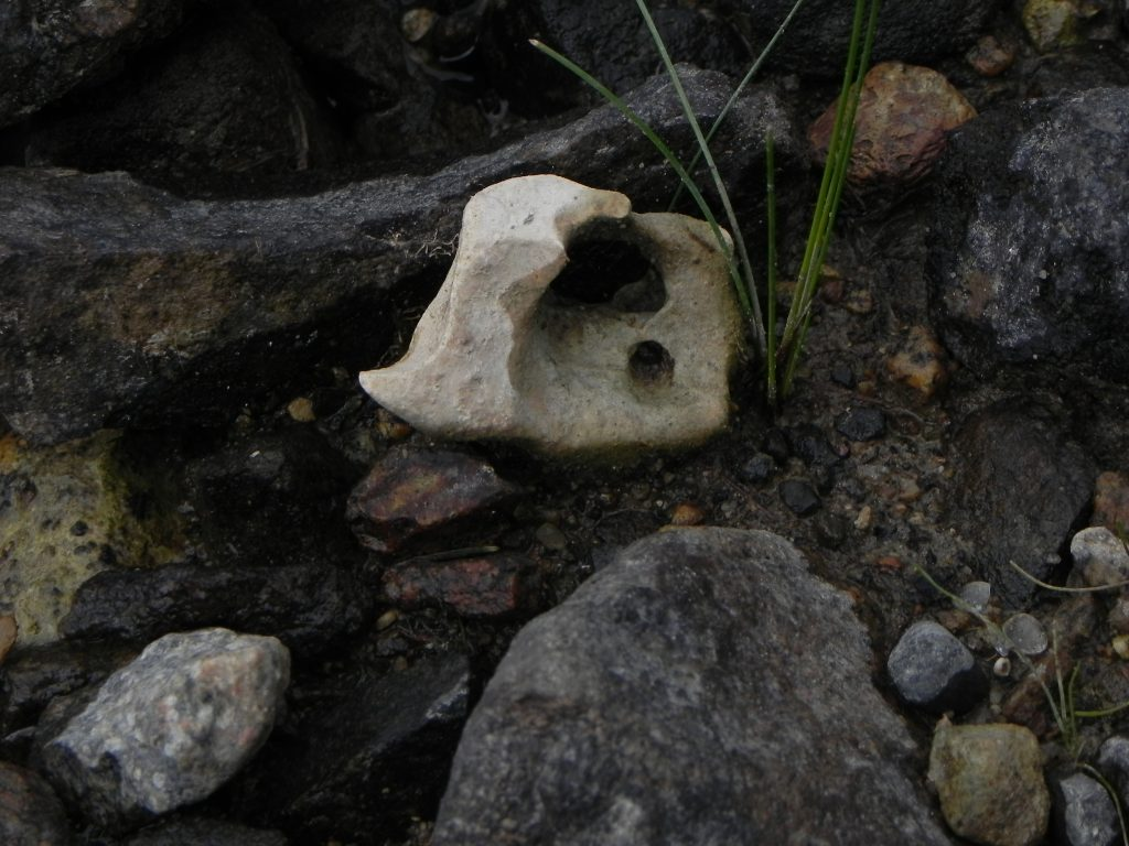 """All kinds of interesting natural finds wash up on the banks of the Groundhog River. Zeke discovered this interesting specimen in amongst a rocky """"island"""" that often gets covered by water when the river is high."""