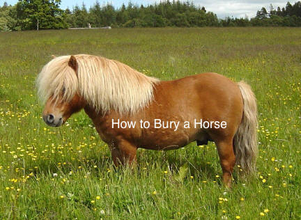 How to bury a horse.