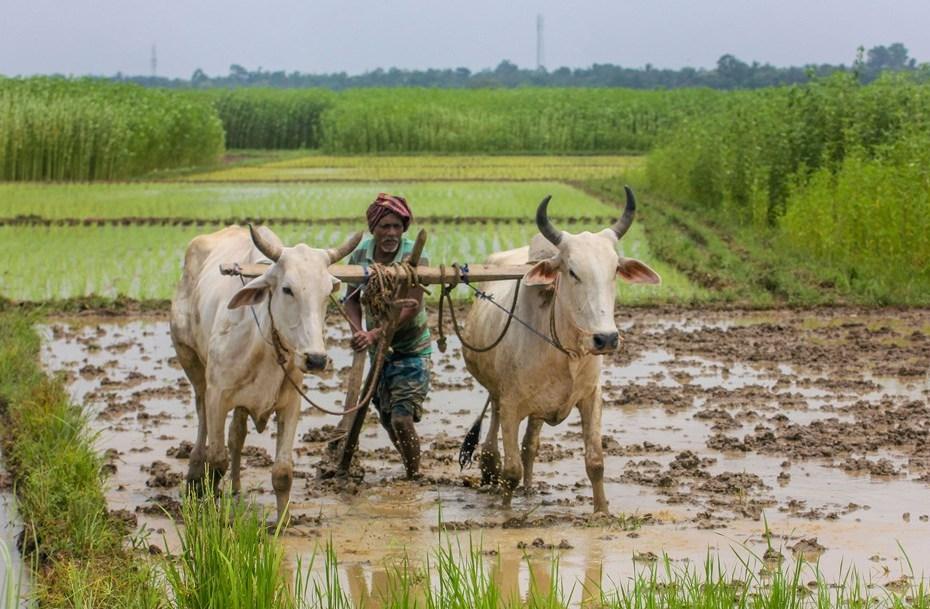 किसान सम्मान निधि योजना : इन किसानों को नहीं मिलेगी 2000 की किस्त
