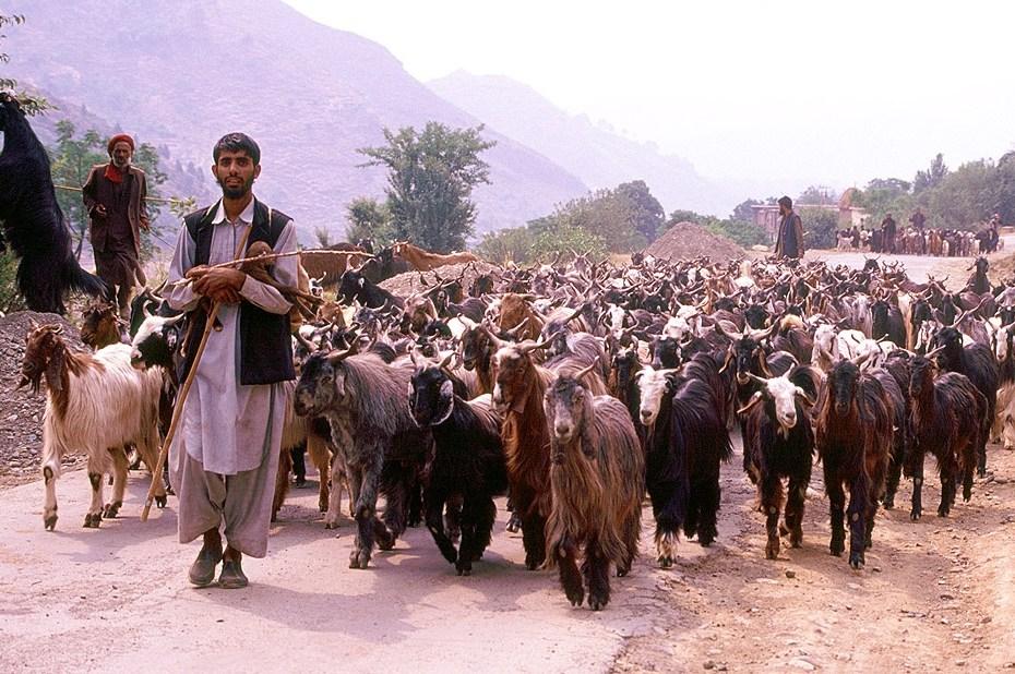 Kashmir Nomads Gujjar and Bakkerwals