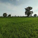 परेशान-हैं-छोटे-स्तर-के-किसान-pic-2-1.jpeg