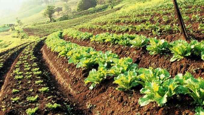 जैविक खेती: आपदा को अवसर में बदलती ग्रामीण महिलाएं