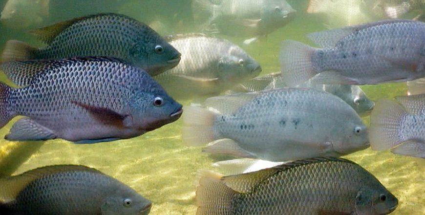 33 aquatic species worldwide