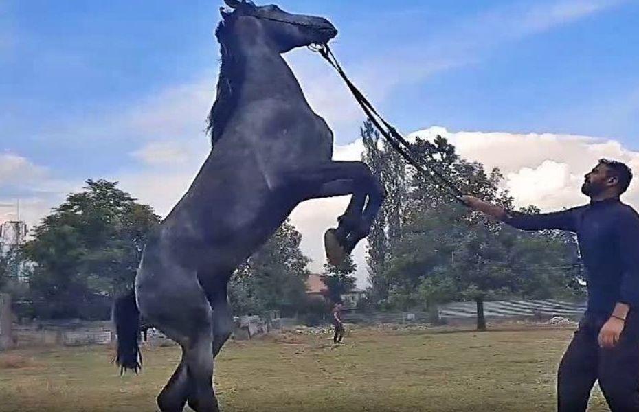 First Horse riding school in Kashmir