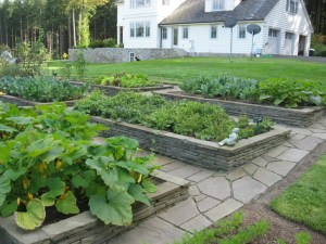 planting a garden on the septic field