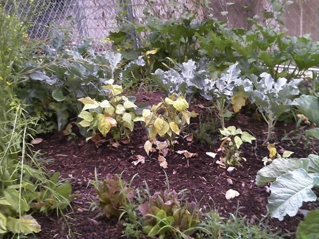The Quintessential Black Farmer: The Urban Garden