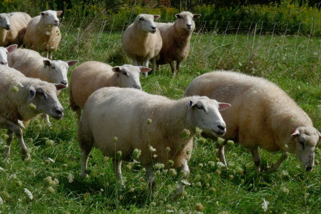 Grazing & Pasture Management – Class 8