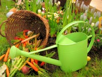 Groundswell's Spring Mixer & Plant Swap
