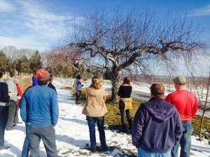 Grafting and Pruning in the February Sun at Indian Creek Farm