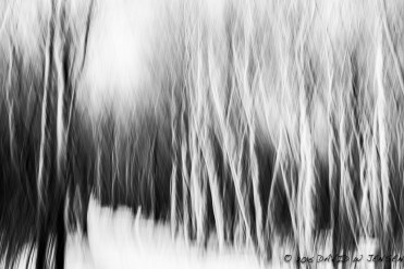 Phantom Forest