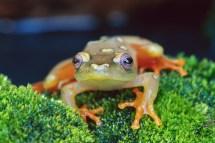 groupinganimals Amphibians