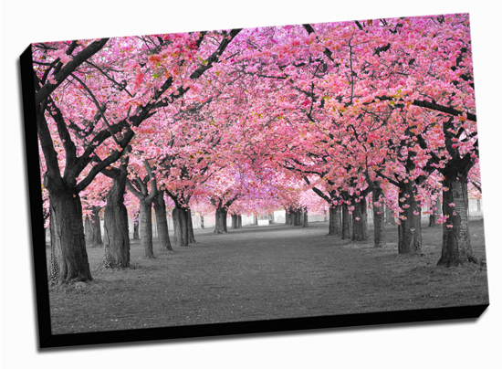 36x24 Gallery Wrapped Canvas Prints