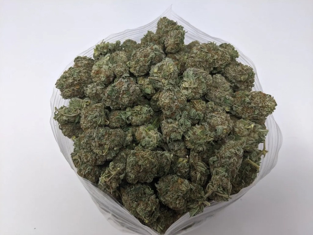 Cannabis Buds in Grove Bag to Prevent Mold when curing