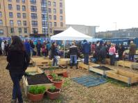 A great celebration of gardening and community in the heart of Fountainbridge