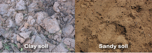 Clay and sandy soil